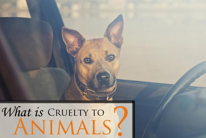 Do you need a Larimer County Cruelty to Animals lawyer? Contact an experienced animal abuse attorney in Fort Collins, Colorado for a free consultation.