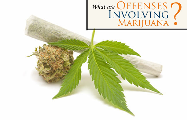 Charged with one of the Fort Collins Municipal Court Offenses Involving Marijuana? Read more about your charges and why you need an attorney on your side.